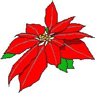 poinsetta-small.jpg